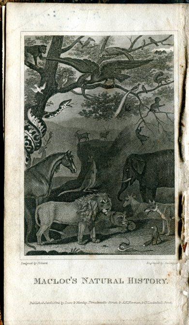 Natural History 149