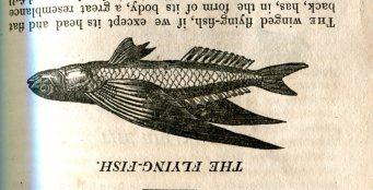 Natural History 151